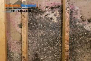 mold behind wall